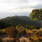 New Zealand - Robert Brodey -002