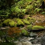 New Zealand - Robert Brodey -004