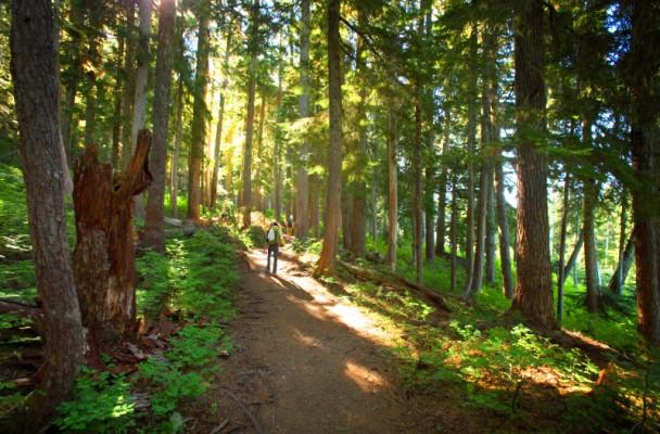 BC Forest - Robert Brodey